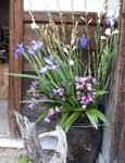 門脇のウエルカムのお花