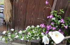 玄関脇のお花